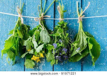 Herbs Are Dried On The Clothesline