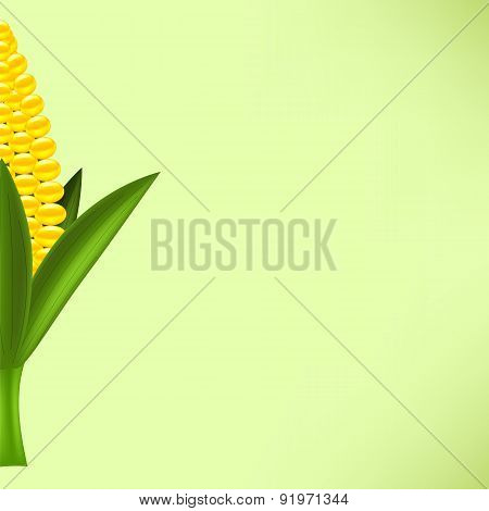 Yellow Cob Corn