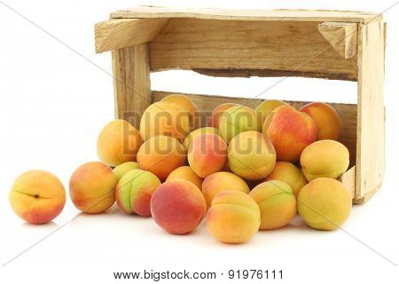 fresh colorful apricots in a wooden box on a white background