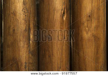 Eucalyptus Emplaizada