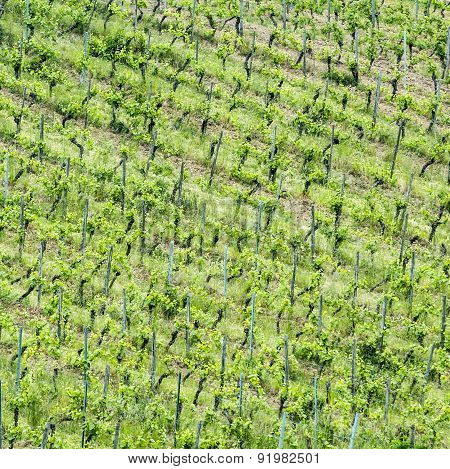 Vineyards Abstract
