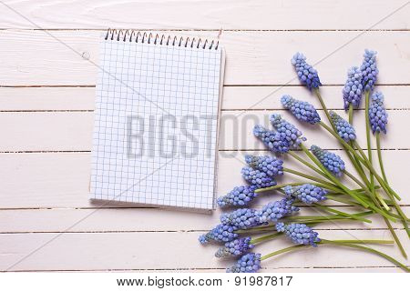 Background With Fresh Muscaries And Empty Notebook