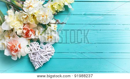 Background With Fresh Daffodils And Willow Flowers And Decorative Heart