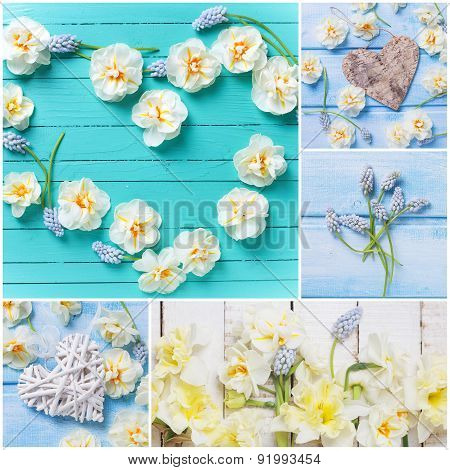 Collage From  Photos With Tender Narcissus Flowers And Decorative Heart