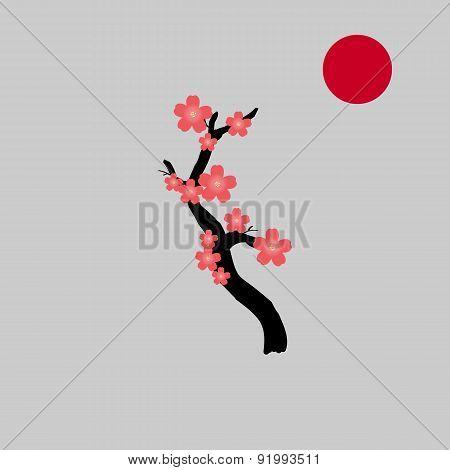 Blooming Sakura Tree. Japanese Cherry Tree.