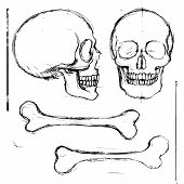 image of skull bones  - Isolated pencil hand drawn human skull and tibia bones front and side view - JPG