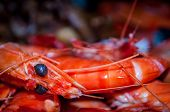 stock photo of tiger prawn  - Freshly cooked tiger prawns  - JPG