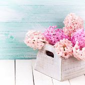 stock photo of blush  - Background with fresh blush pink hyacinths in wooden box on white wooden planks against turquoise wall - JPG