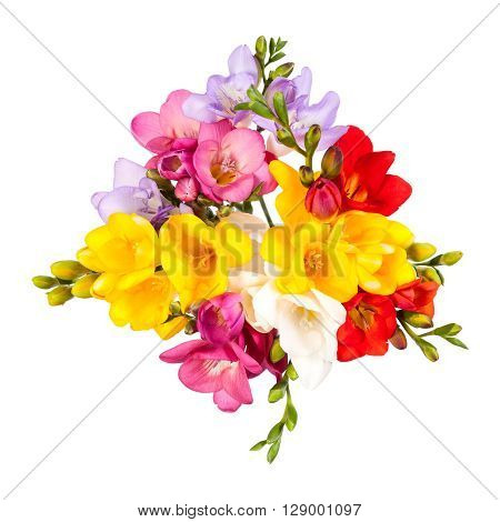 The Blooming Freesia. Isolated on white background.
