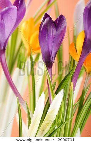Reich spring flowers