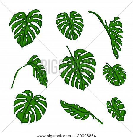 A set of Botanical tropical fern leaves to create bushes and trees in computer graphics. The elements of the game. Vector illustration