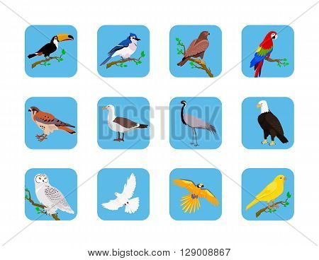 Collection of various birds flat design. Birds flying, owl and animals, bird vector, eagle wild, wildlife character, fauna and flying, toucan and zoology illustration