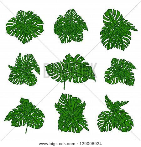 The collection of tropical wild bushes of fern to create a cartoon's background in computer graphics. The elements of the game. Vector illustration