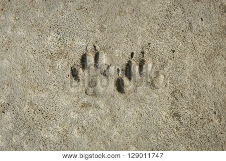 dog footprints permanent imprint on concrete floor