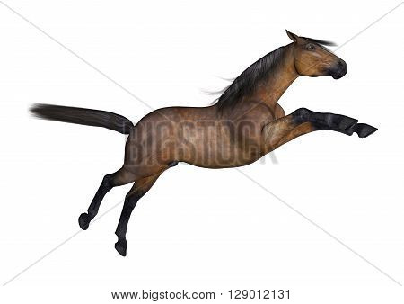 3D Rendering Bay Horse On White