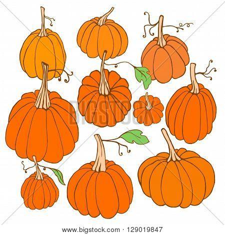 Set of hand drawn pumpkins. Isolated pumpkins on white background. Pumpkin collection. Vector pumpkin design element.