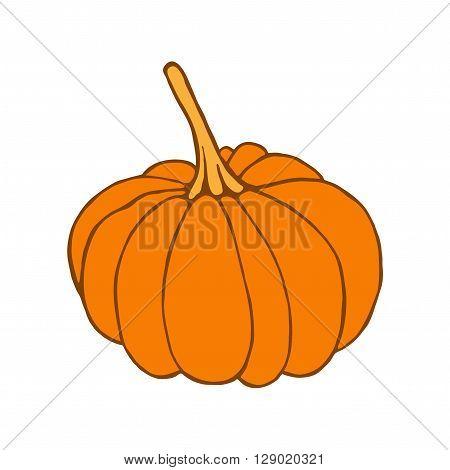 Pumpkin on white background. Isolated orange pumpkin. Pumpkin design element for food label. Cute hand drawn pumpkin. Pumpkin vector icon.