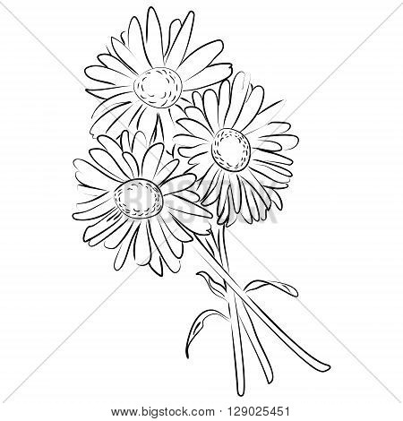 Vector illustration of an ink sketch of camomile flower
