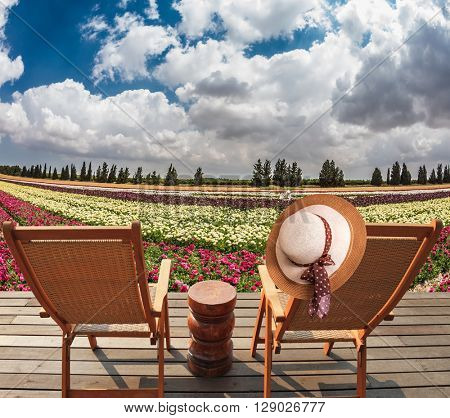 The huge field buttercups on kibbutz on the border with Gaza Strip. At the edge of field on a wooden platform are two comfortable sun loungers. On one of them hangs a hat