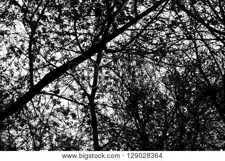 Branches of trees with a bird sitting on a branch. Black and white illustration