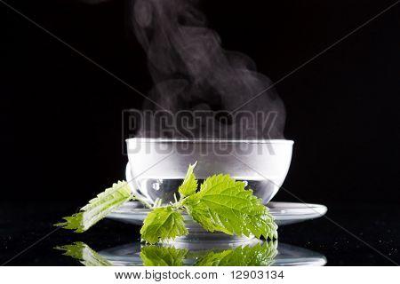 tea nettle
