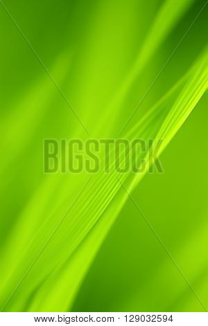 Abstract blurred green background Grass. Vertical format.
