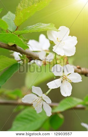 spring tree with flowers