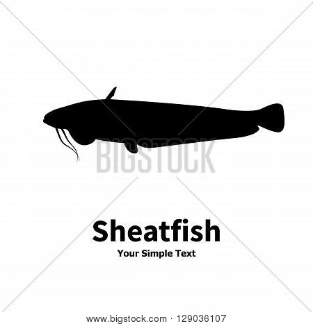 Vector illustration silhouette of fish catfish. Isolated sheatfish on a white background.