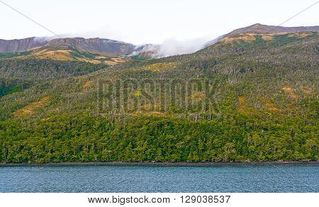 Verdant Fuegian Forest in Terra del Fuego in Chile
