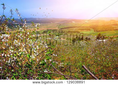 Beautiful spring landscape with wild flowers and sunshine