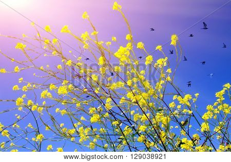 Beautiful spring scene with wild flowers and sunshine over blue sky
