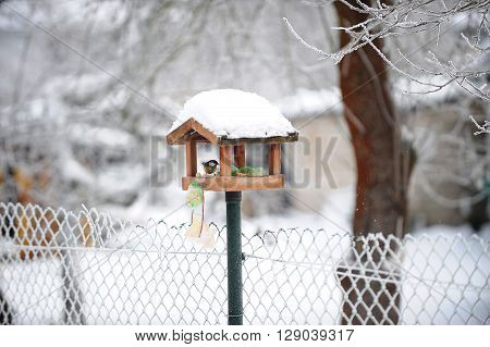 titmouse in bird feeder on fence in winter