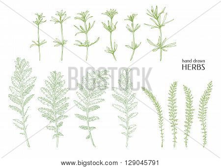 Hand drawn herbs. Vector weed. Ink graphic.