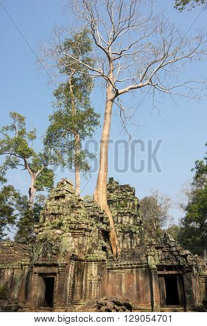 Ruins of Ta Prohm temple at Angkor Wat complex Siem Reap Cambodia