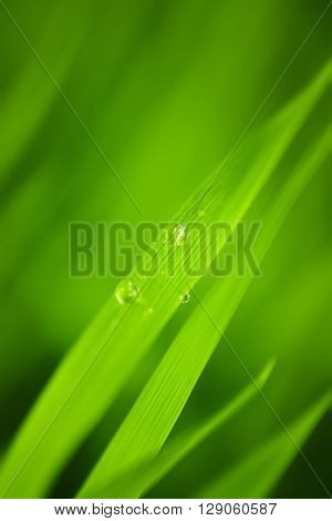 Abstract blurred Grass background. 