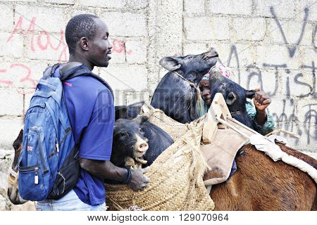 FOND BAPTISTE, HAITI -- FEBRUARY 29, 2016:  Two unidentified people loading pigs purchased at the Fond Baptiste market into a donkey's side packs.  Focus on highest pig.