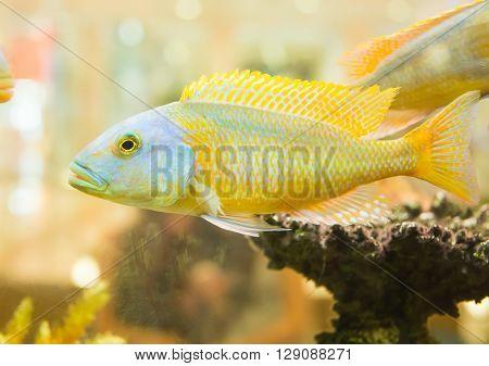 fish in an aquarium, pimple, sea, silver, small,