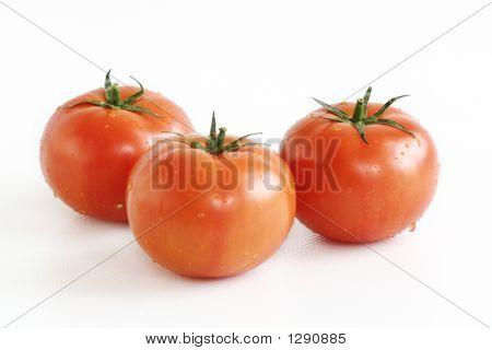 Fresh Hydroponics Tomatos