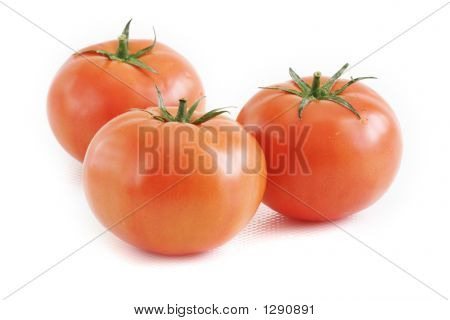 Three Hydroponics Tomatoes