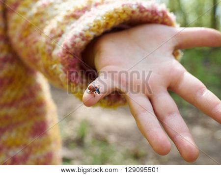 Ladybug In A Child's Hand.