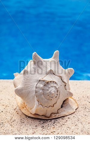 Summer vacation - big sea shell by swimming pool