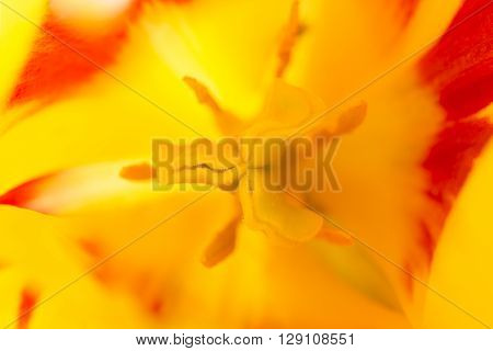 Macro flower colored petal bloom pistil background