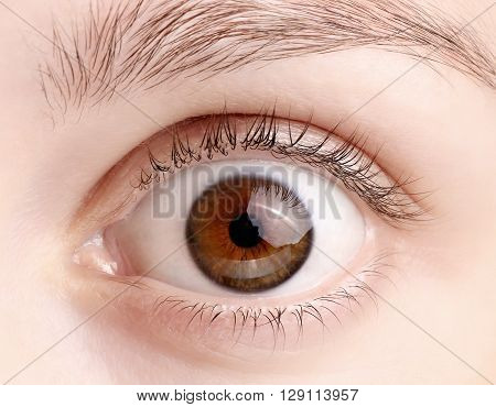 Macro image of wide open female brown eye