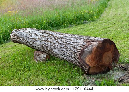 Cut and fallen walnut tree, can be used as bench