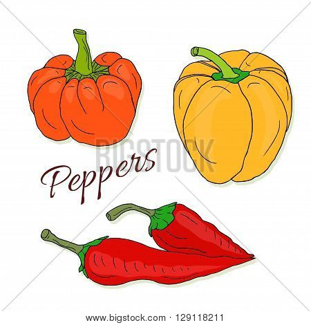 Set of vector hand drawn sketch peppers. Chili and bell pepper. Vector colorful isolated vegetables.