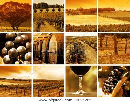Montaje de vino