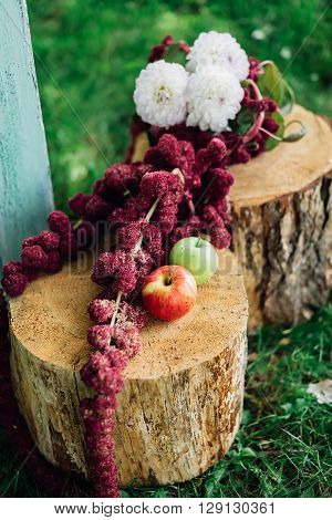 Flowers and apples lying on the stumps