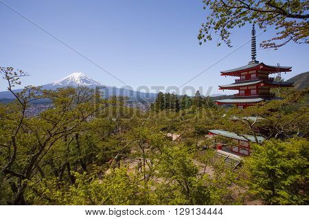 Japanese Chureito pagoda and Mountain Fuji in spring season