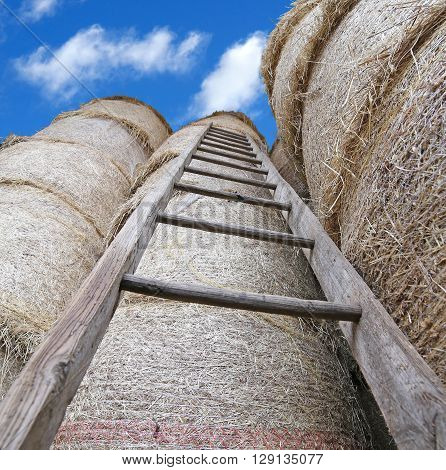 Wood Ladder In The Barn With Bales Of Hay