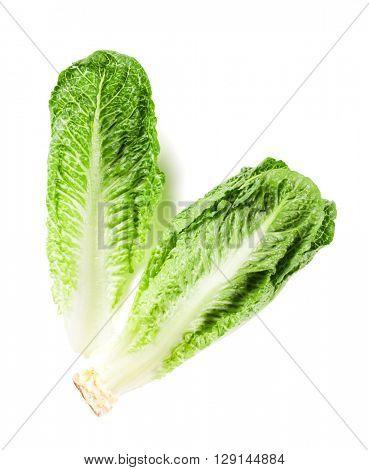 Romaine lettuce salad. Isolated on white background